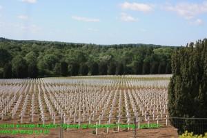 Gravpladsen ved L´Osusuaire de Douaumont - også kaldet Benhuset ved Verdun. Fotograferet sommeren 2013.